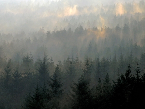 Mist Rising from Trees