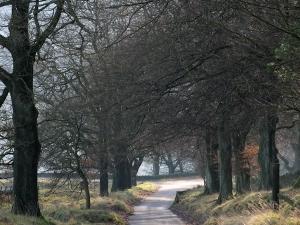 The Street, Goyt Valley