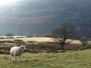 Misty View, Goyt Valley