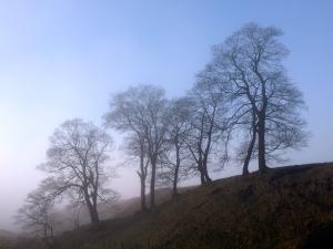 Goyt Valley Trees